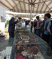 Auer Hühnerverkauf 2.jpg