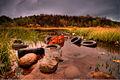 Autumn Tyres.jpg