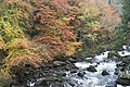 Autumn colours at the Hermitage - geograph.org.uk - 1585706.jpg