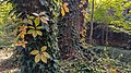 Autumn season in Butanic Garden فصل پاییز در باغ بوتانیکال تفلیس 49.jpg