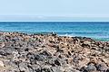 Avenida das Praias. Puerto del Carmen. Lanzarote-3.jpg