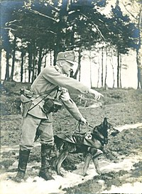 Search and rescue dog - The complete information and online
