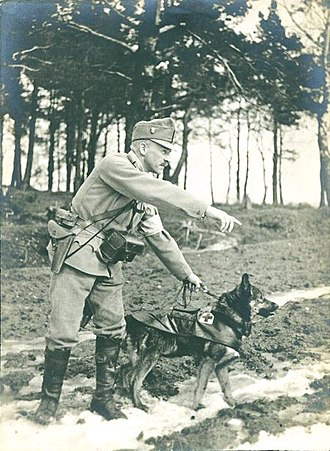 Search and rescue dog - Austro-Hungarian sanitary dog in WWI, 1914.