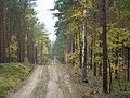 BRZEZINY - PIECZYSKA 15 - panoramio.jpg