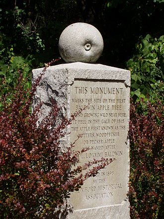 Baldwin (apple) - Monument to the Baldwin Apple at the site where it was discovered, Wilmington, Massachusetts
