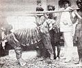 Bali tiger zanveld.jpg