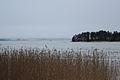 Baltic sea reeds (12694779423).jpg
