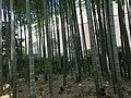 Bamboo, Komae Ryokuchi Area 20180708.jpg