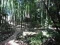 Bamboo (183447981).jpg