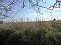 Banked field boundary, off Hessle Lane - geograph.org.uk - 1749055.jpg