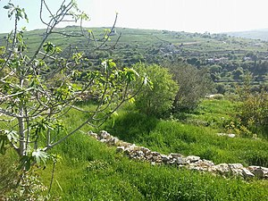 Baraachit - Pastoral view of Baraachit