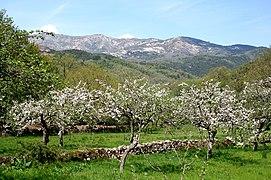 Bastelica Vallée1aJPG.jpg