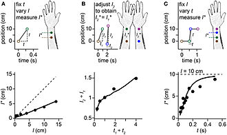 Cutaneous rabbit illusion - Image: Bayesian model reproduction of length contraction illusions including the cutaneous rabbit illusion