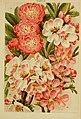 Beautiful flowering trees and shrubs for British and Irish gardens (1903) (19737839923).jpg