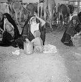 Bedoeïenenvrouwen in traditionele kledij en kind, gehurkt op de achtergrond eze, Bestanddeelnr 255-3442.jpg