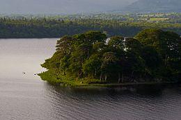 Beezie's Island