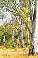 Belli Park Sunshine Coast Queensland Australia (6).jpg