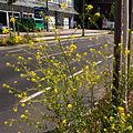 Berlin wilhelm-kabus-strasse 19.06.2012 15-42-31.jpg