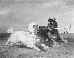 De twee honden (de stok van de baas)