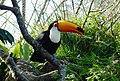 Beto Carrero Zoo - panoramio (33).jpg