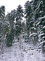 Big Trees - panoramio (1).jpg