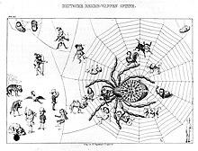 Deutsche Reichs-Wappen Spinne, politische Karikatur, 1848/1849: Eine Spinne, die die Kräfte der Monarchie symbolisiert, umgarnt einen Großteil der Parlamentarier, dargestellt als zoomorphe Figuren, zugunsten eines monarchistischen Verfassungsentwurfs in der Frankfurter Nationalversammlung.[4] (Quelle: Wikimedia)