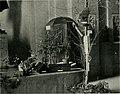 Bird-lore (1916) (14775280533).jpg