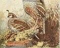 Bird lore (1912) (14564179128).jpg