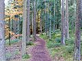 Black Forest- path (10562040746).jpg