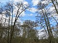 Blue skies over Holme Fen - April 2016 - panoramio.jpg