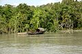 Boat, trees and water in Sundarbans.jpg