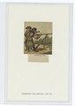 Bockschützen, 1493 (NYPL b14896507-89681).tif