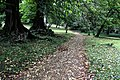 Bogor Botanical Gardens - panoramio.jpg