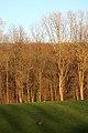 Bois de la Louvière - Livierenbos, Flobecq - Vloesberg 30.jpg