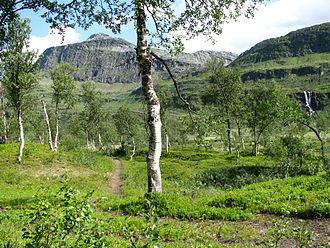 Ofoten - Image: Boreal birch and waterfall Arctic Norway