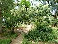 BotanicGardensPisa (38).JPG