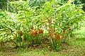 Botanic garden limbe155.jpg