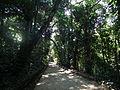 BotanicalGardenRio-AtlanticForest.jpg