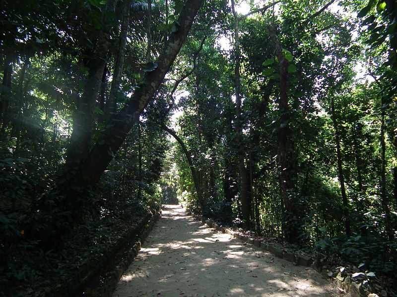 Ficheiro:BotanicalGardenRio-AtlanticForest.jpg