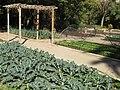 Botanical garden of Valencia 20.jpg