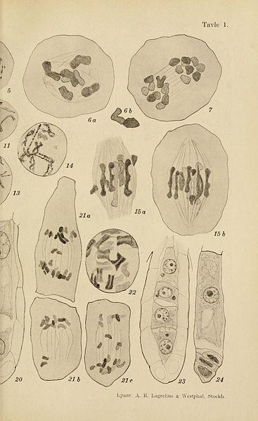 File:Botanisk tidsskrift BHL5149310.jpg