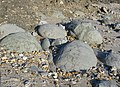 Boulders on the beach - geograph.org.uk - 696751.jpg