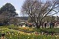 Bowral NSW 2576, Australia - panoramio (11).jpg
