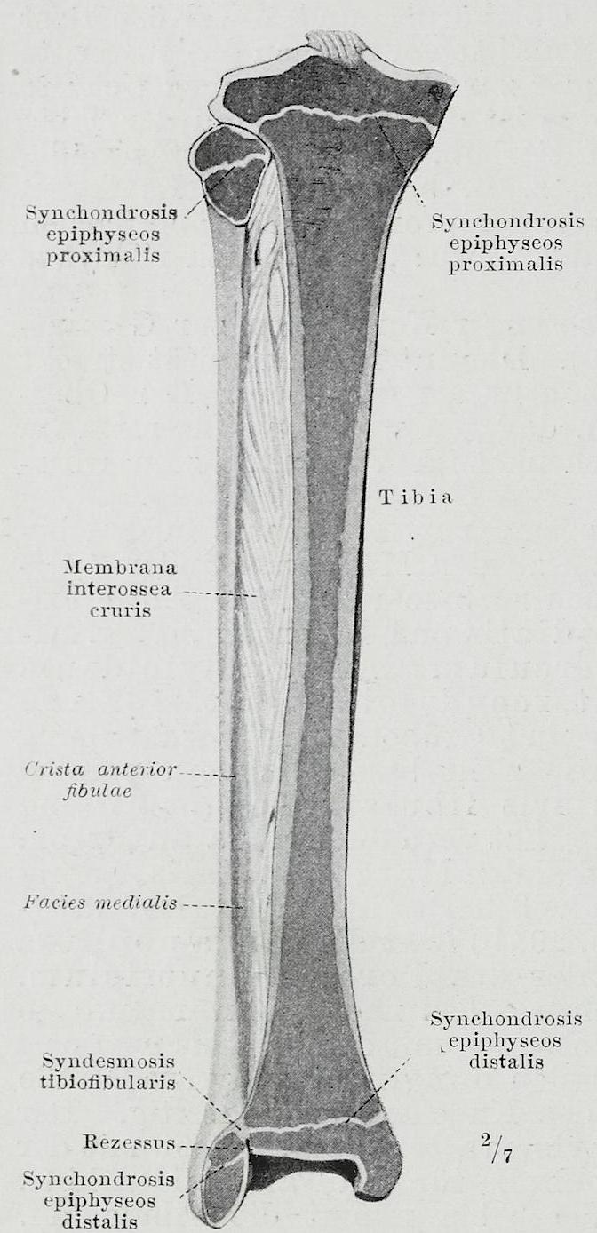Braus 1921 292