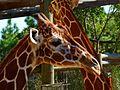 Brevard Zoo, Viera FL - Flickr - Rusty Clark (59).jpg