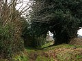 Brier Lane - geograph.org.uk - 708909.jpg