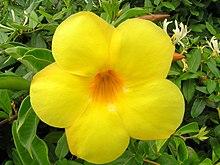 Bright yellow flower.jpg