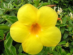 Bright yellow flower.jpg