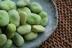 250px-Broad-beans-after-cooking