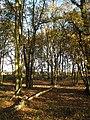 Broom Belt, Forty Acre Plantation - geograph.org.uk - 625987.jpg